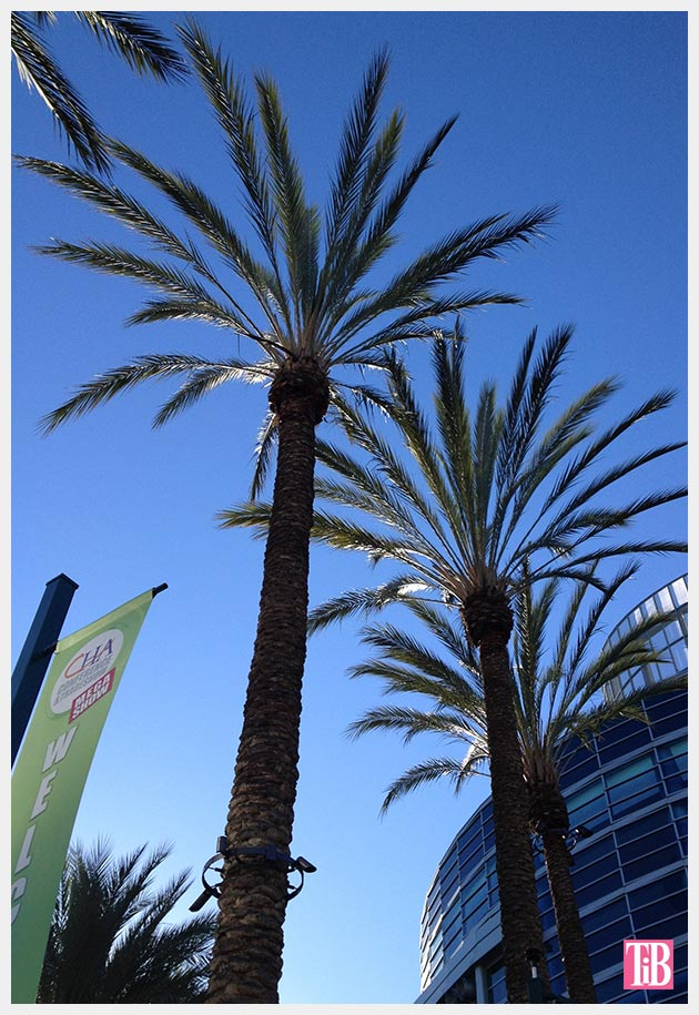 Palm trees Anaheim Convention Center