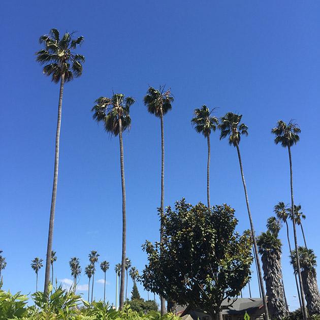 insta-palms