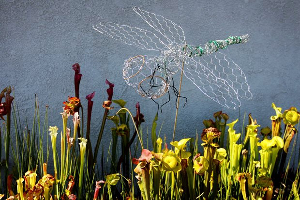 Therapeutic Chicken Wire Dragonflies by Rad Megan